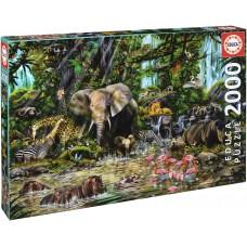 Educa 2000 - African jungle, John Enright