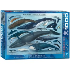 Eurographics 1000 - Kits and Dolphins