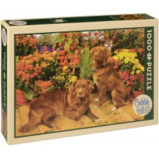 Cobble Hill 1000 - New-Scottish Retrievers