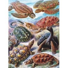 New York Puzzle  1000 - Turtles