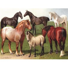 New York Puzzle  1000 - Horse breeds