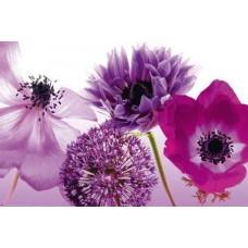 Florishing Flowers