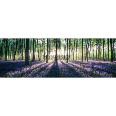Enchanted forest - jumbo